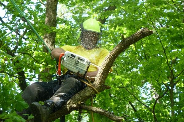 A2 - International Arborist Certificate