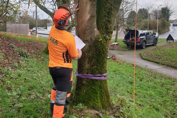 IPTI-1 - International Professional Tree Inspection Certificate